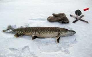 Гилевское водохранилище рыбалка