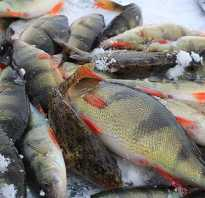 Рыбалка на ике татарстан