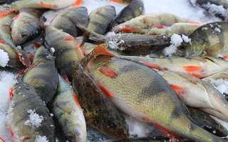 Рыбалка в вологде рыболовные места