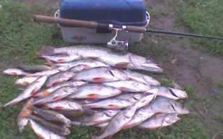 Маливо коломенский район рыбалка