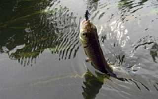 Рыбалка на сухом донце