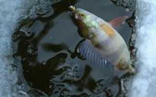 Река иневка рыбалка