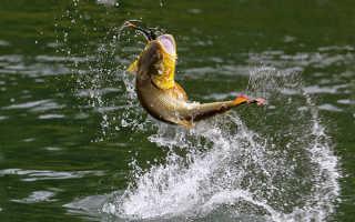 Рыбалка в пляхо туапсинский район