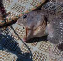 Рыбалка в кеми