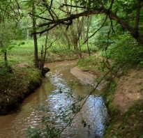 Река братовка рыбалка