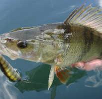 Клев рыбы в марте