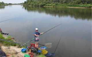 Рыбалка на толстолоба в днепропетровской области