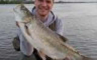 Рыбалка белый раст