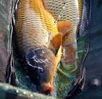 Курск безлесное рыбалка
