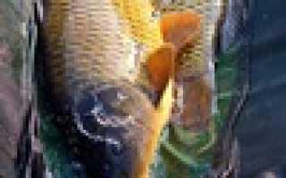 Любимовка курская область рыбалка