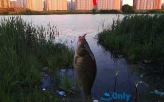 Рыбалка в переделкино