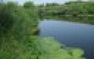 Река плава тульская область рыбалка