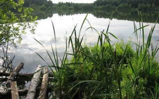 Медвежьи озера рыбалка зимой