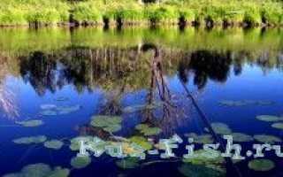 Клепиково алтайский край рыбалка