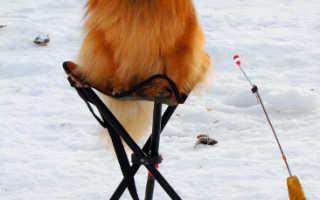Отчеты о рыбалке хакасия