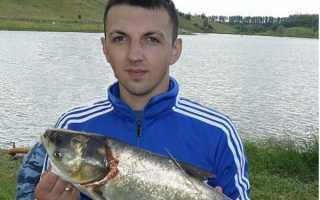 Прогноз клева рыбы курск