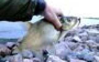 Рыбалка кронштадт