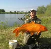 Северный казахстан рыбалка