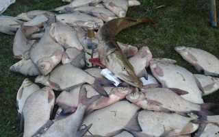 Рыбалка салдыбаш