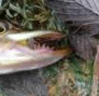 Черная речка рыбалка