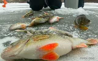 Рыбалка в катайском районе