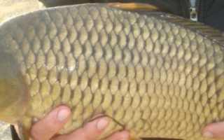 Рыбалка на светлых горах