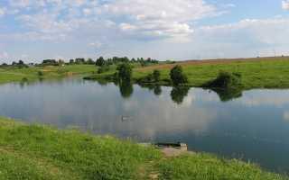 Рогачево дмитровский район рыбалка