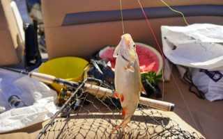 Остров мудьюг рыбалка зимой