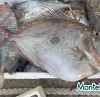 Арбун рыба
