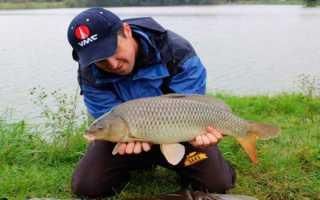 Прогноз клева рыбы в вознесеновском ставропольский край