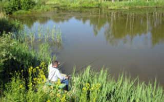 Черкизовский пруд химки рыбалка