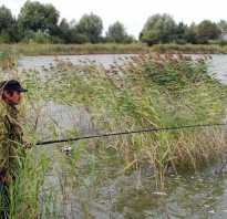 Рыбалка в гомеле карась