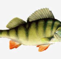 Бисертский пруд рыбалка