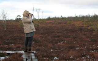 Торфяники калининградской области