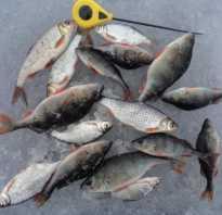 Кишеньки рыбалка