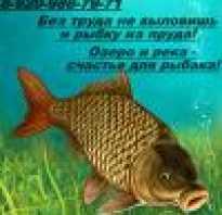 Рыбалка в михайлове