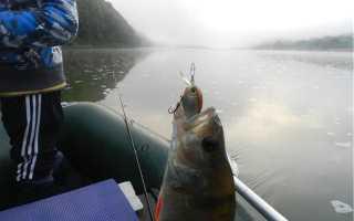 Прогноз рыбалки на днестре