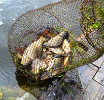 Торопецкий район рыбалка