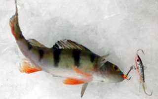 Рыбалка на балансир борок ярославской