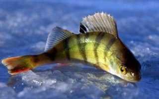 Рыбалка красный яр саратовская область