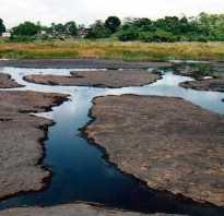 Озеро дегтярное волгоградская область