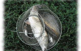 Рыбалка в иноземцево