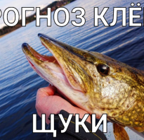 Прогноз клева рыбы в ужуре