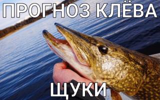 Прогноз клева рыбы в глухове